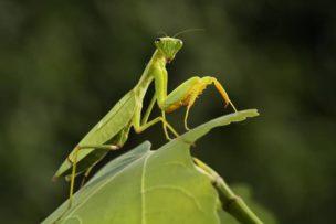 昆虫界のハンター